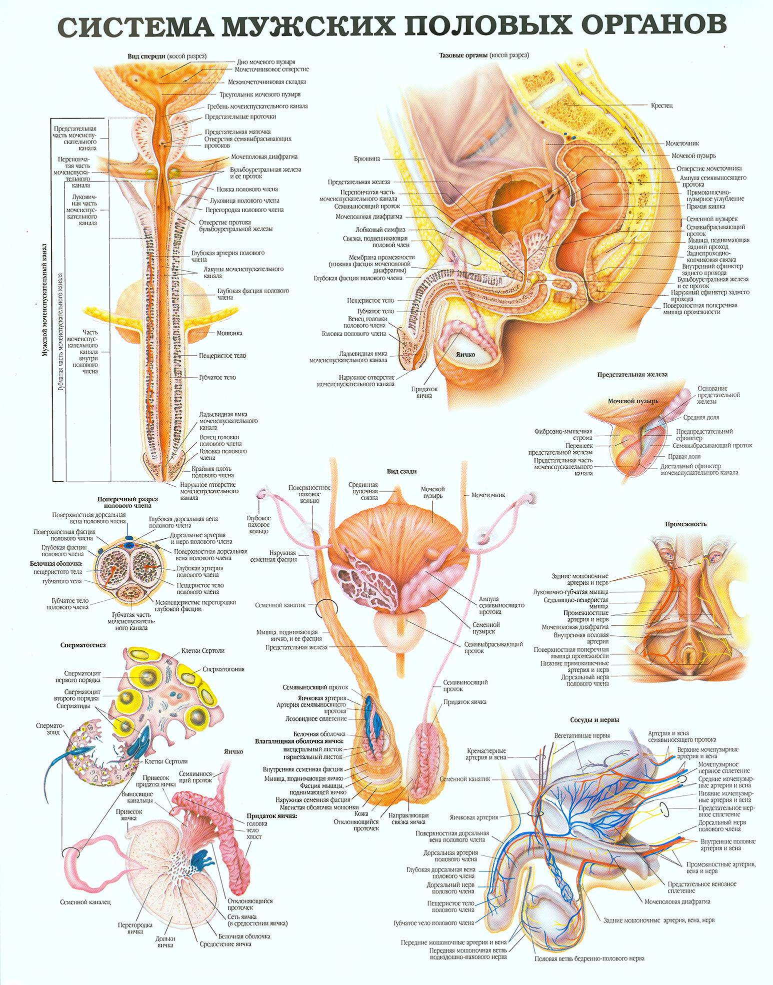 berkova-pokazivaet-stroenie-polovih-organov-vaginu-ochen-polnih