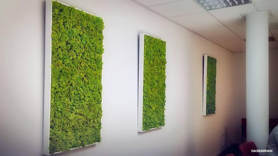 Super Levend groen in de vorm van een schilderij aan de muur, met mos is VW-46
