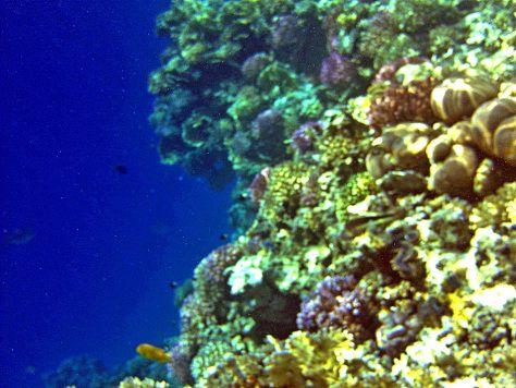 Punainenmeri