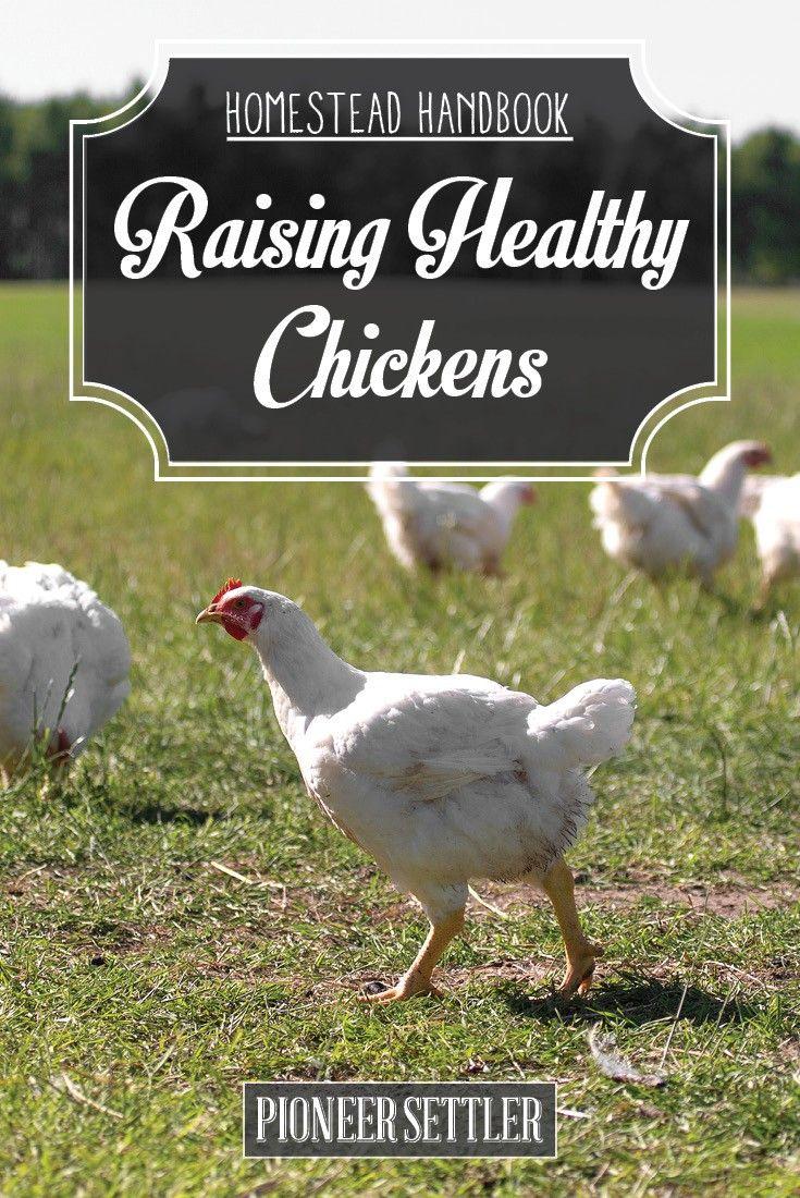 HH healthy chickens