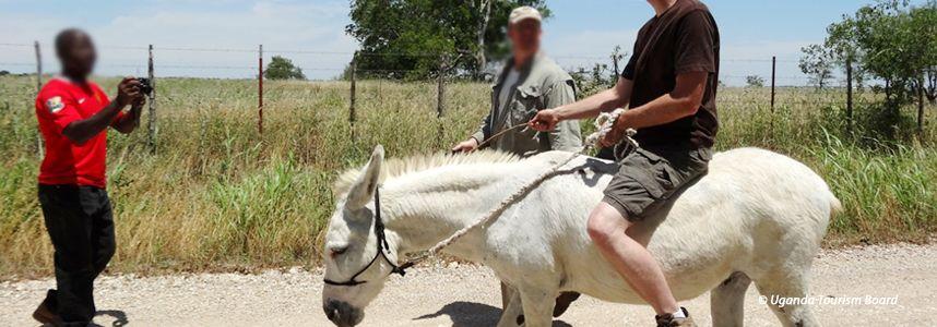 Visitors can enjoy horseback riding around Kampala Gardens, Lubowa, and Jinja in Uganda