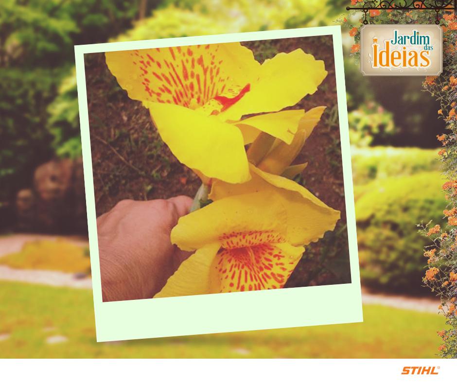 Faça como a Gloria Targino Praxedes que nos enviou uma foto da sua flor chamada popularmente de Canna-índica, Bananeirinha-da-índia ou Bananeirinha-de-jardim, mas que tem o nome cientifico de Canna x generalis.