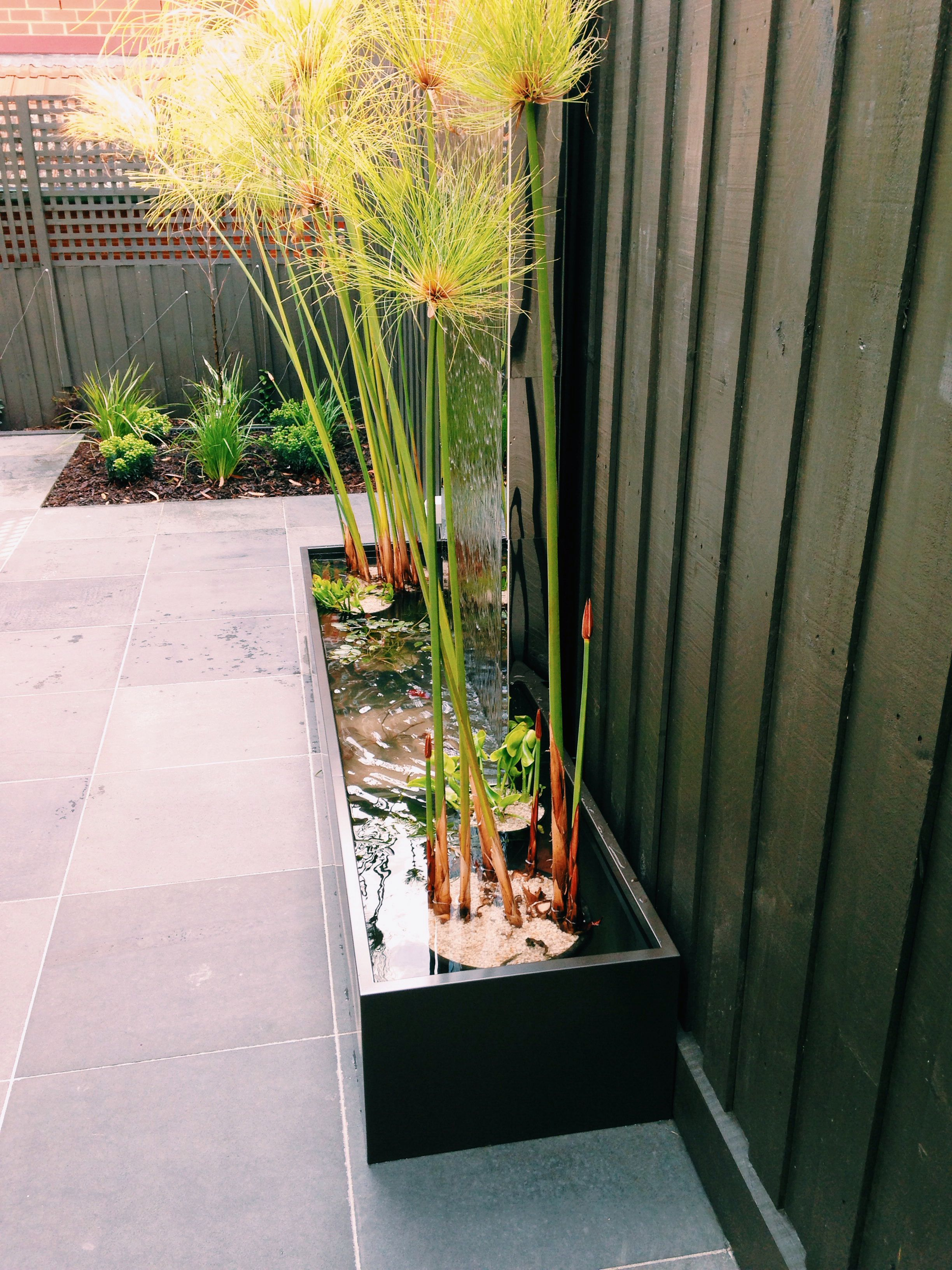 Garden bed with trees  Brief contemporary water feature u plants Challenge space for