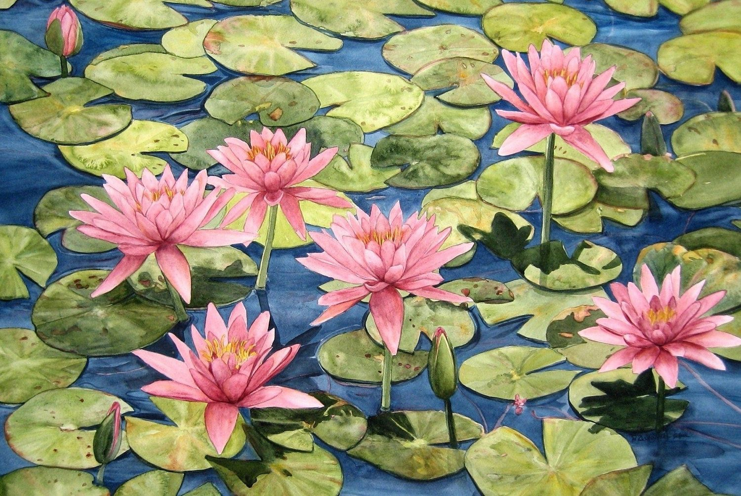 Drawing water lilies with pencil wandaz koi water lily and pink waterlily garden watercolor painting reproduction by wandas watercolors izmirmasajfo Gallery