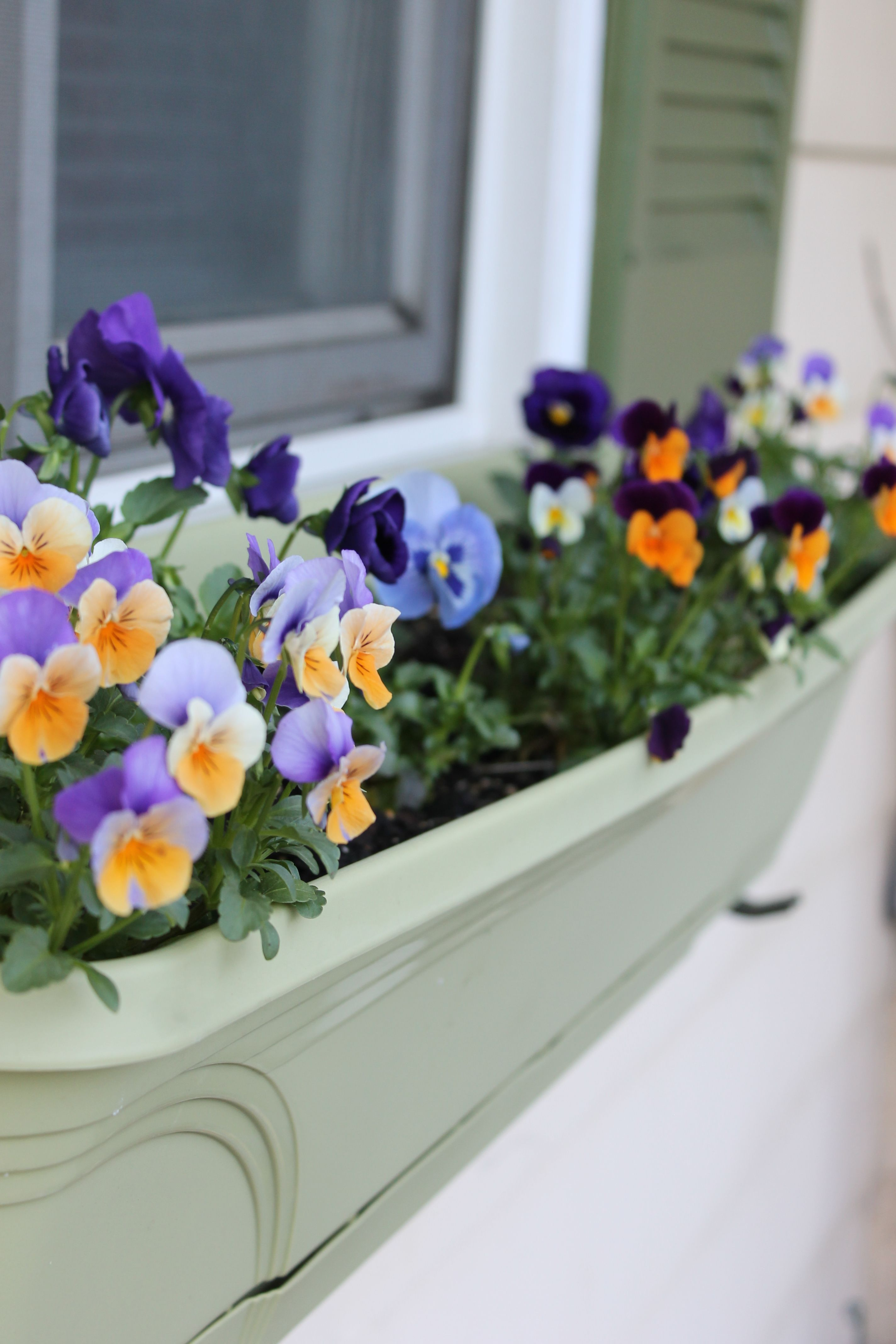 New flower box outside the kitchen window. Filled with pansies and ...