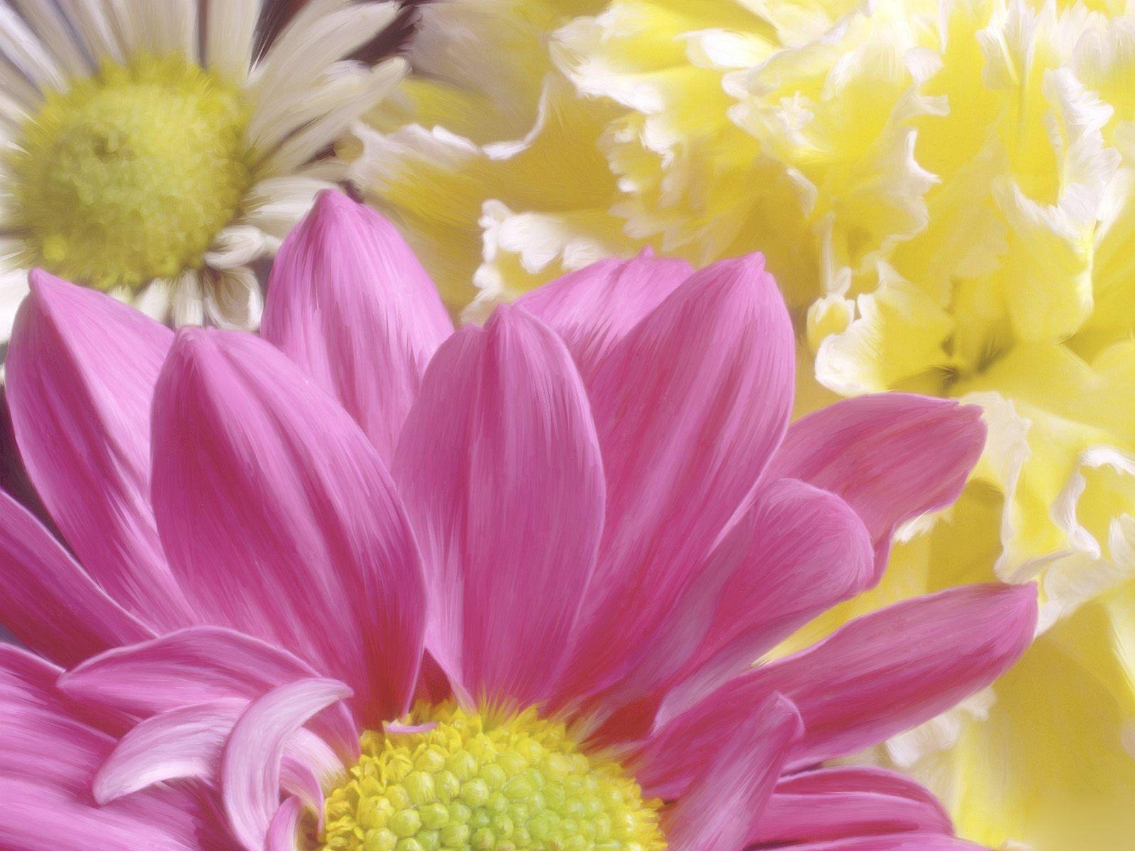 Chrysanthemum Morifolium Flowers Flower Photos Art Lilac Flowers