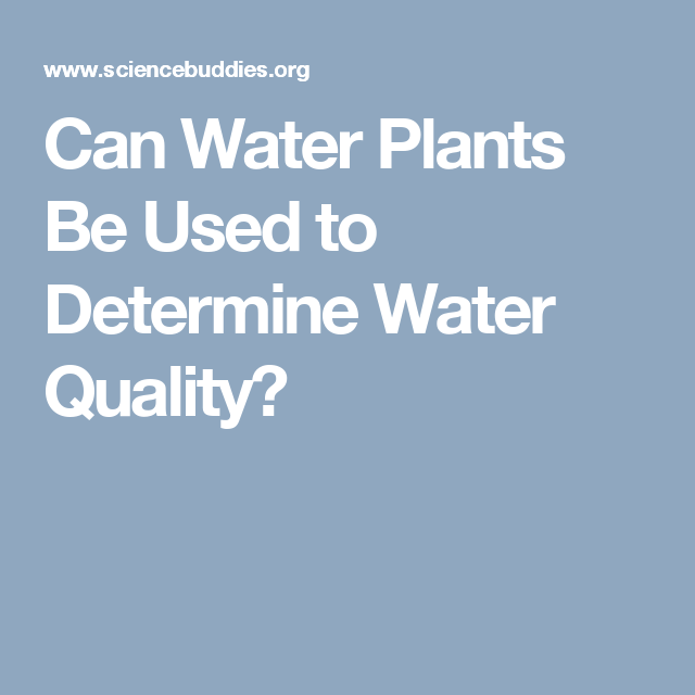 Can Water Plants Be Used to Determine Water Quality