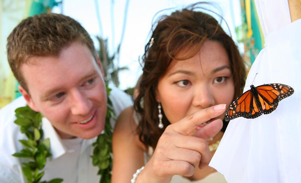 my beautiful Hawaii wedding butterfly release at our