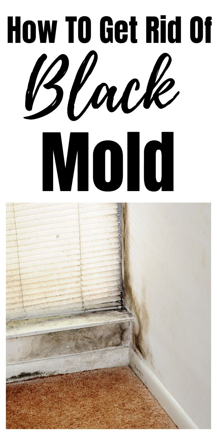 How To Get Rid Of Black Mould In Dishwasher