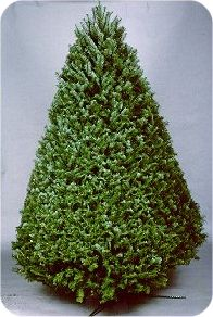 national christmas tree association all about trees tree characteristics
