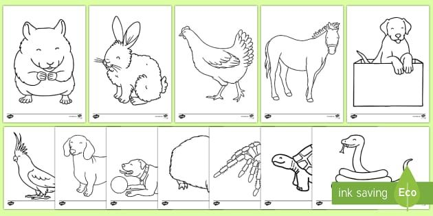 Cat And Rabbit Coloring Pages Pictures