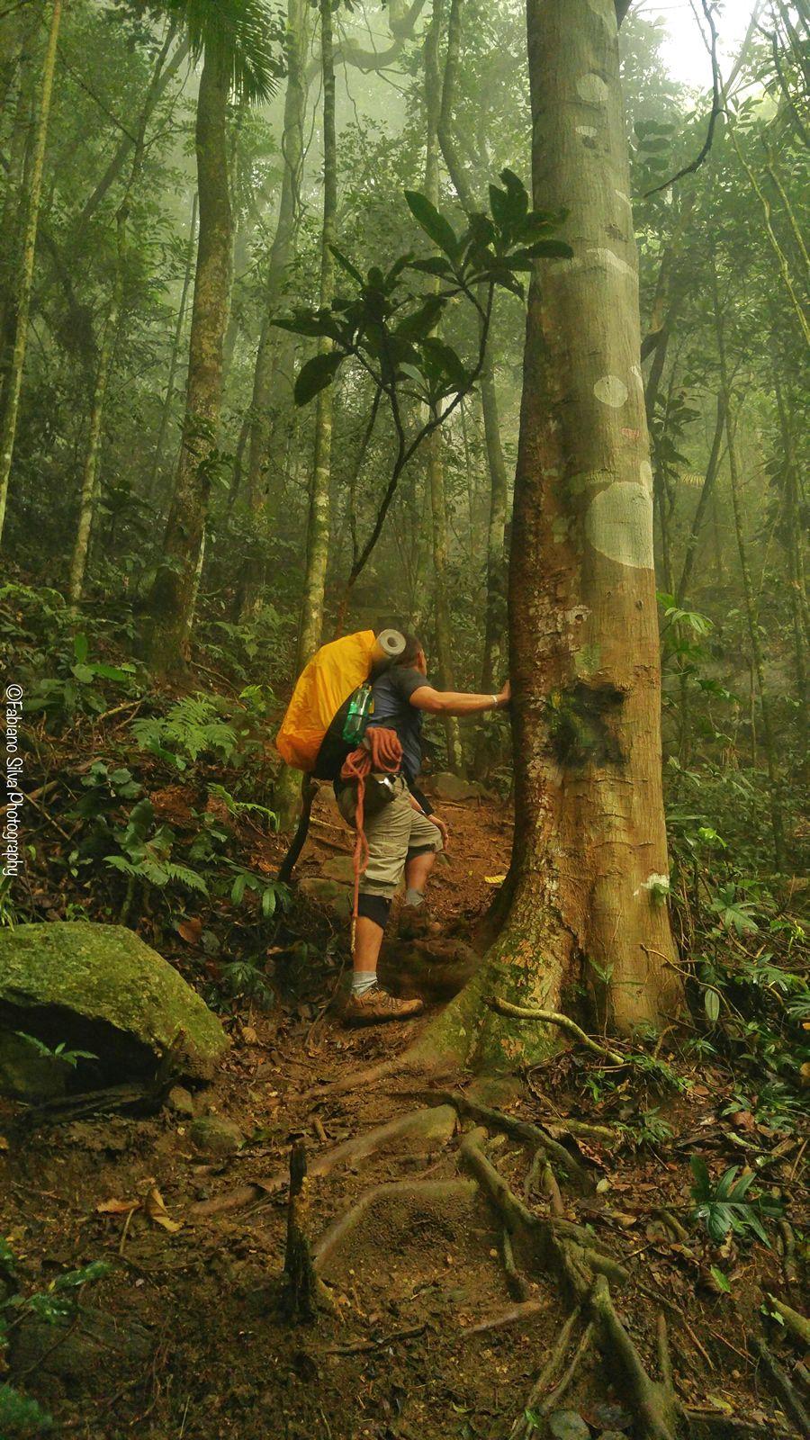Pedra Da Gavea Via Pico Dos 4 Parque Da Tijuca Rj Fotos Do