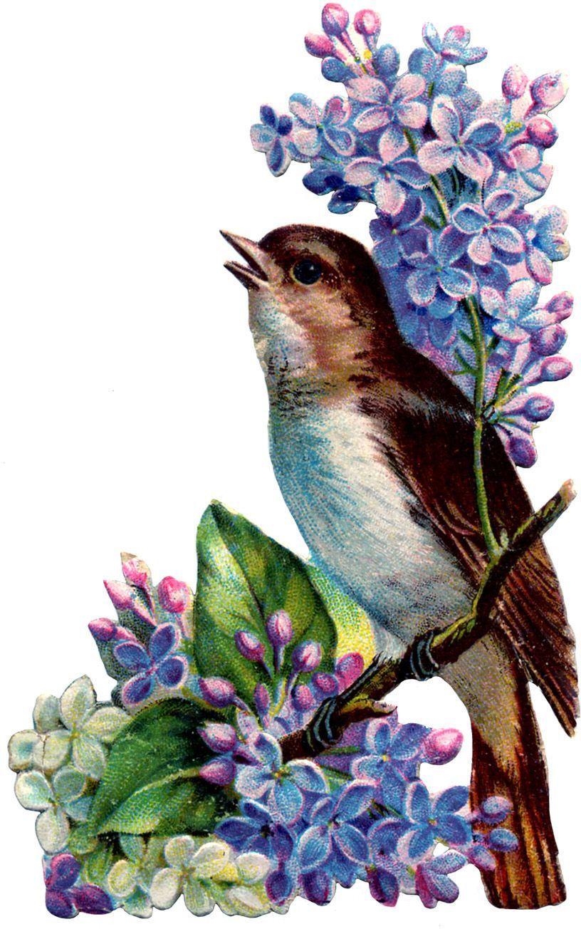 Открытки птички поют, приколы картинках