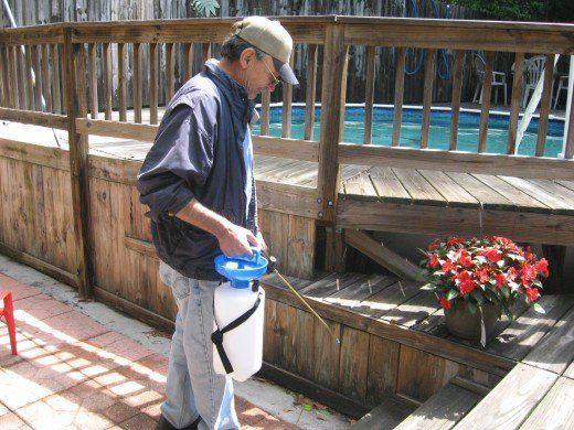 How to Get Rid of Fleas in Dogs | Flea treatment, Fleas ...