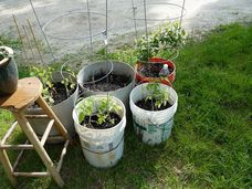 Why not try growing your crops in recycled bins, better than the rubbish tip, wouldn't you agree?