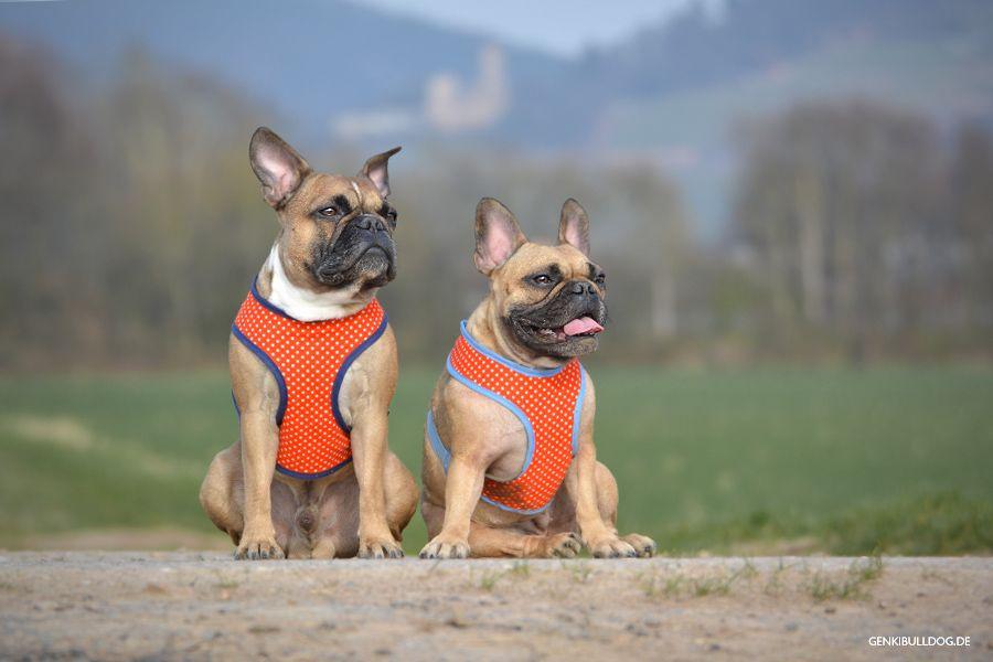 Anleitung: Softgeschirr für Hunde selbst nähen | Französische ...
