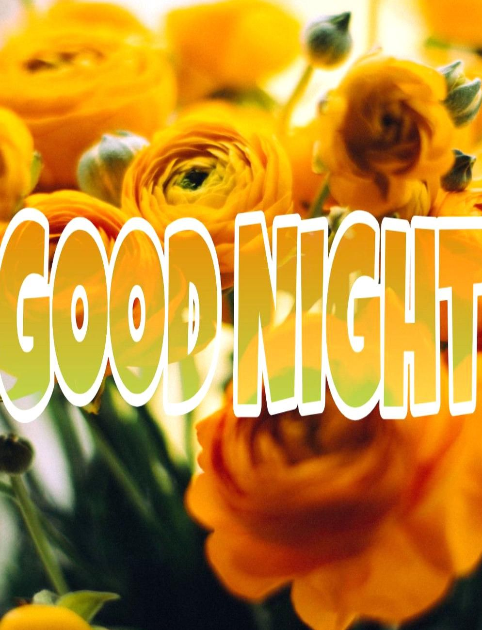 Here Is The Collection Of Good Night Yellow Rose Flower Images For Whatsapp Download These Photos Pictures Free A In 2020 Instagram Dp Yellow Rose Flower Flower Images