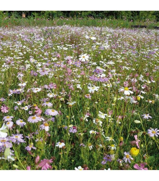 Parterre De Fleurs Pour Le Jardin Avec Ce Gazon Fleuri A Semer