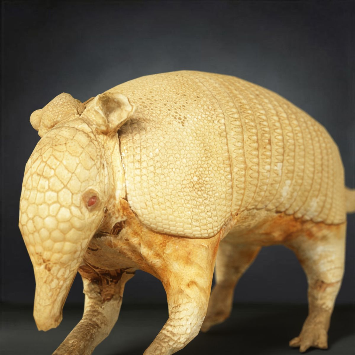 Pin by CGTrader on 3D Animals Poses, Mammals, Animals