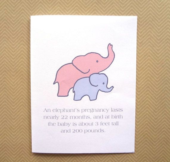 funny baby congratulations card funny baby shower card for expectant mother card for new mom elephant card - Baby Shower Cards