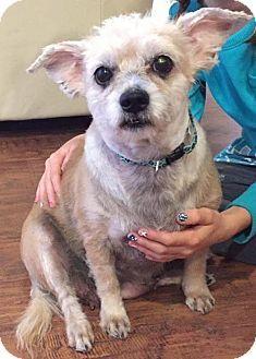 Terrier Unknown Type Medium Poodle Miniature Mix Dog For Adoption In Sacramento California Autumn Dog Adoption Kitten Adoption Pets