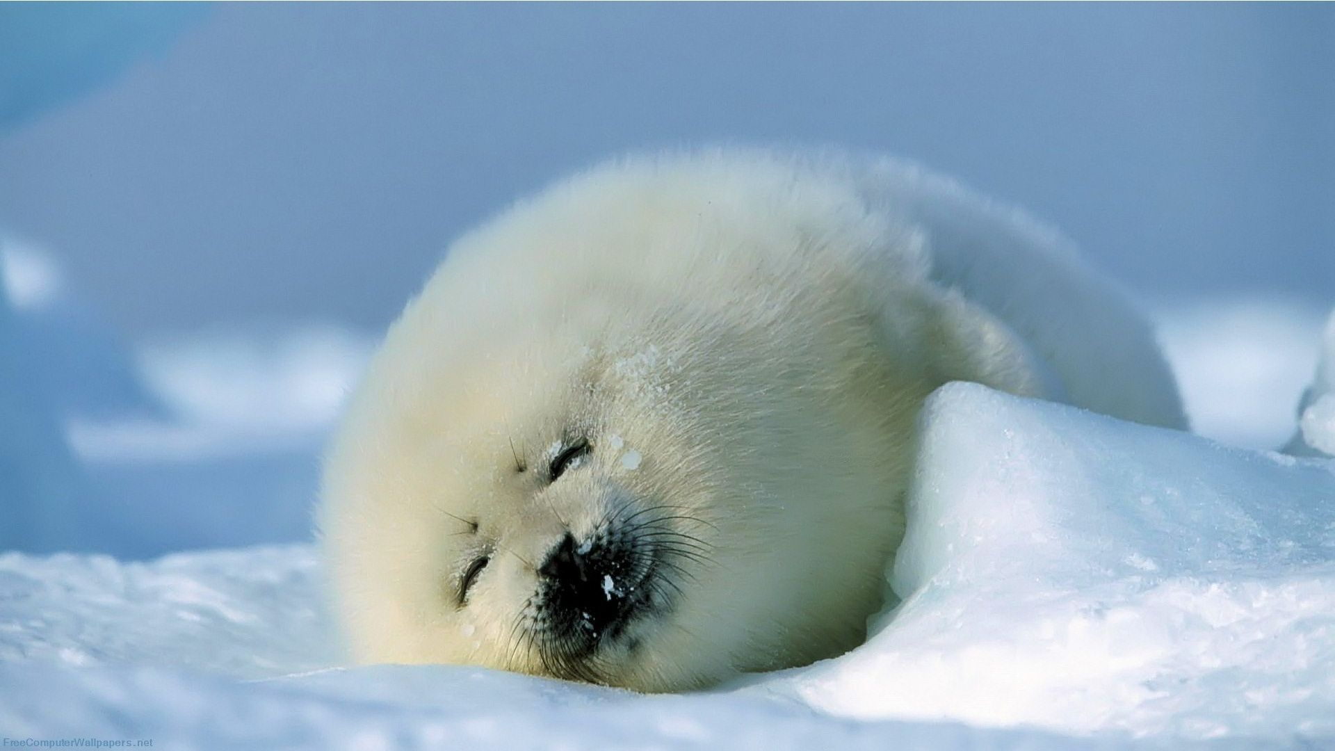 This is such a cute little seal! It must be quite tired...