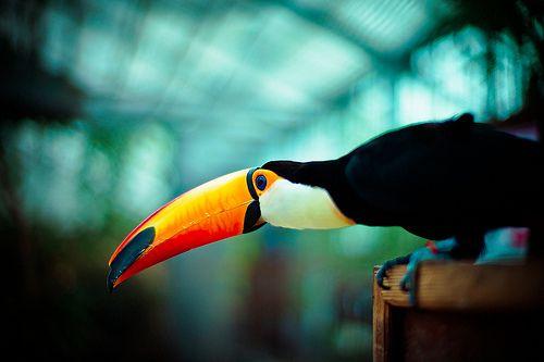 tucan :-) so schön kann nur die Natur sein!