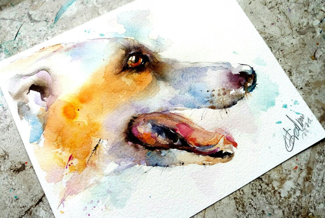 Greyhound Watercolour Painting By Natalie Graham Greyhounds Dog