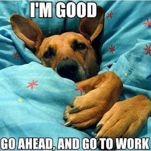 Dog In Bed Funny Quotes Memes Quote Funny Quotes Humor Good Morning Mornings Funny Dog Pictures Funny Animals Funny Dogs