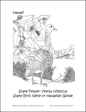 Hawaii Printables State Bird And Flower Coloring Page