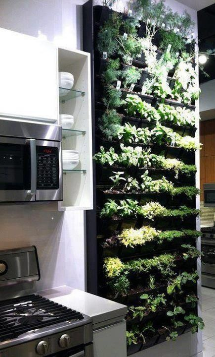 Inside herb garden - I seriously want this in my house