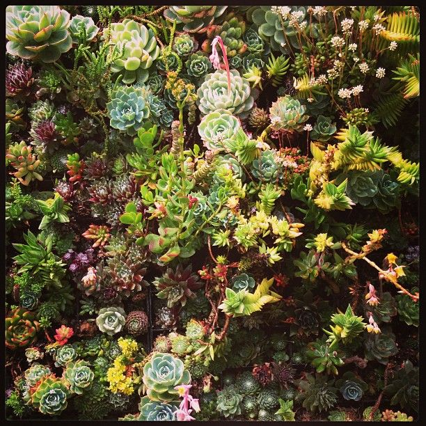 I need a garden of my own  Succulents.  (at Flora Grubb Gardens)