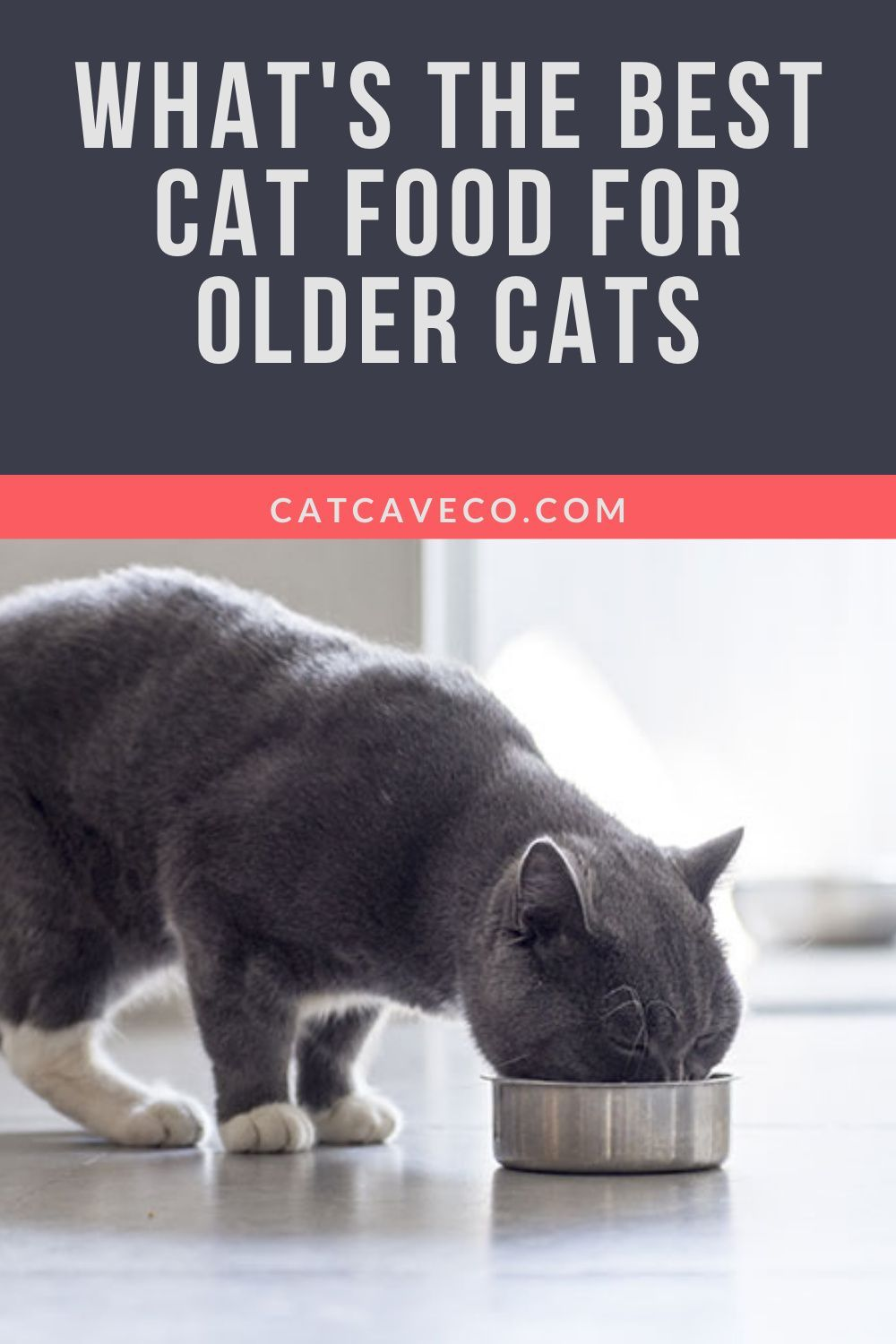 Best Cat Food For Older Cats In 2020 Best Cat Food Cat Food Cool Cats
