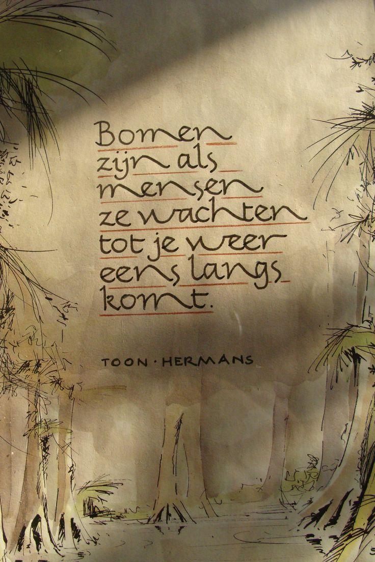 Citaten Over Bomen : Bomen toon hermans quotes inspiration