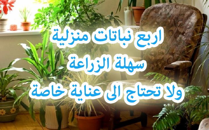 مدونة البريكولاج نباتات الزينة اربع نباتات منزلية سهلة الزراعة ولا تحتاج الى عناية خاصة Easy Care Houseplants Houseplants Plants