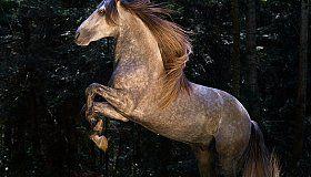 http://www.equine-photo.net/en/freehorses/baroque/