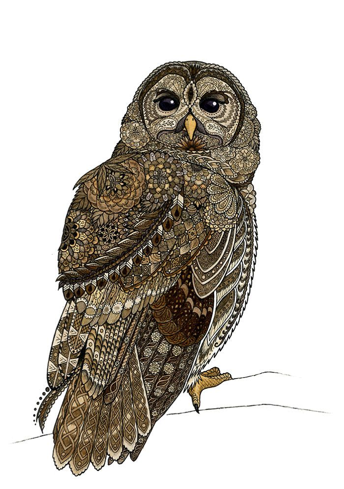 I Draw Intricately Patterned Animals Cameo Pinterest Barred Enchanting Patterned Animals