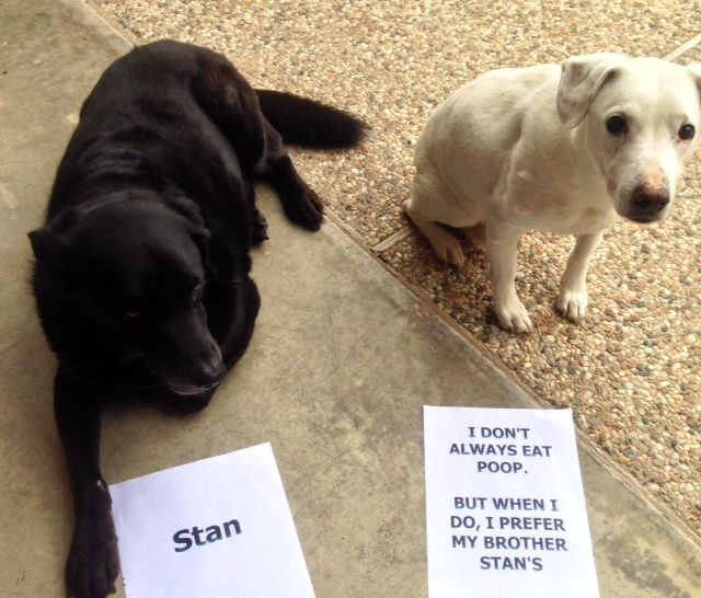 The Most Disgusting Dog In The World Dogs Dog Shaming Dog Lovers
