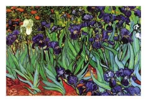 Irises Premium Poster by Vincent van Gogh at Art.com