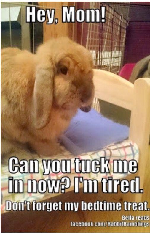 Idea By Catie Randolph On Animals Funny Bunnies Bunny Care Rabbit