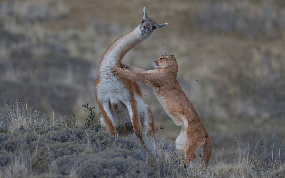 Natural History Museum S Wildlife Photographer Of The Year Competition 2019 Wildlife Photography Wildlife Photographer