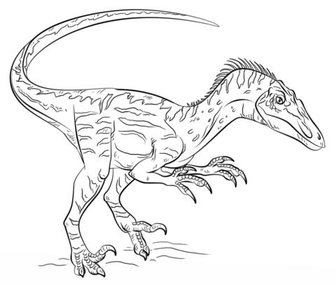 Velociraptor Coloring Page From Velociraptor Category Select From 26388 Printable Crafts Of Cartoo Zeichnung Dinosaurier Dinosaurier Ausmalbilder Ausmalbilder