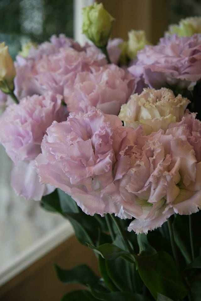 Lisianthus they look like paper flowers lisianthus pinterest lisianthus they look like paper flowers flower types reception decorations floral arrangements mightylinksfo