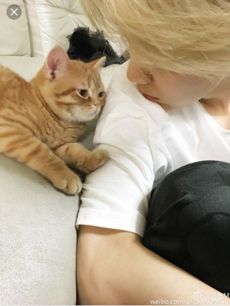 Jimin and a cat