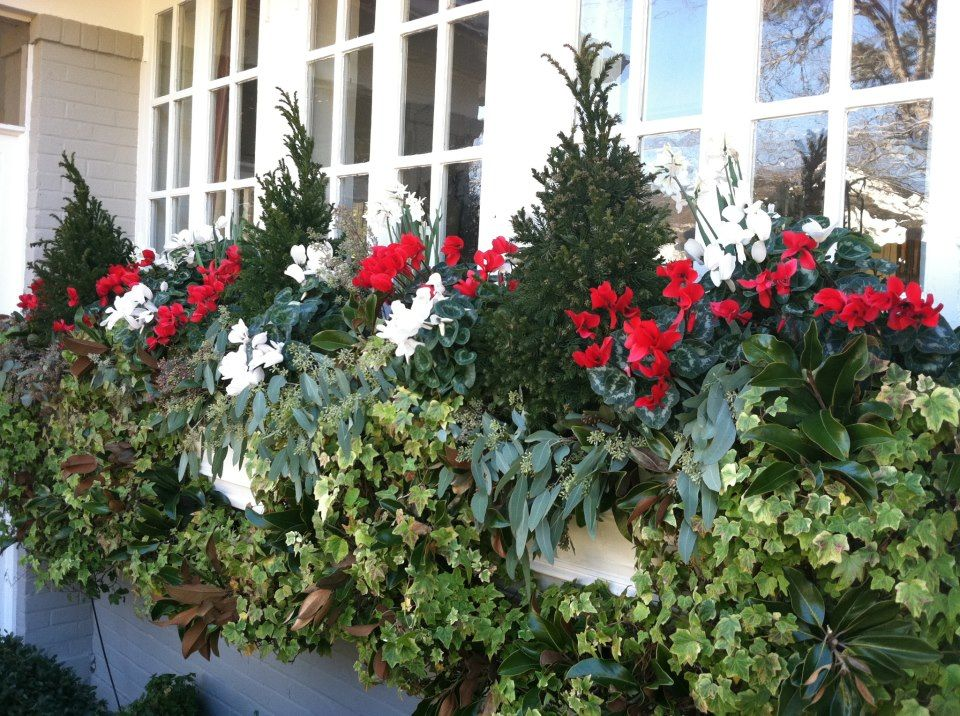 Fill Your Window Boxes With Evergreen Topiaries Cyclamen And Seeded Eucalyptus For A Look Tha Winter Window Boxes Christmas Window Boxes Wall Planters Indoor