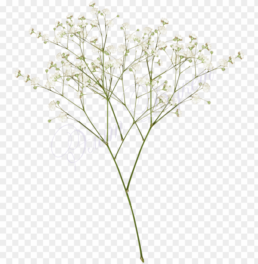Top Images For Baby Breath Flowers Png White On Picsunday Baby Breath Png Image With Transparent Background Png Free Png Images Flower Png Images White Flower Png Phone Wallpaper Pink