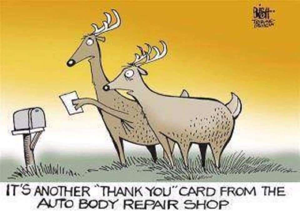 Deer meme funny deer cartoon auto body repair shops