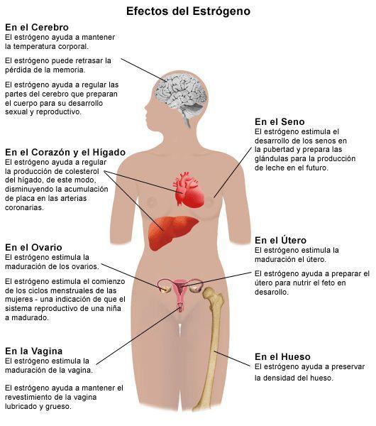 El estrógeno son un conjunto de hormona sexuales que tienen en el ...