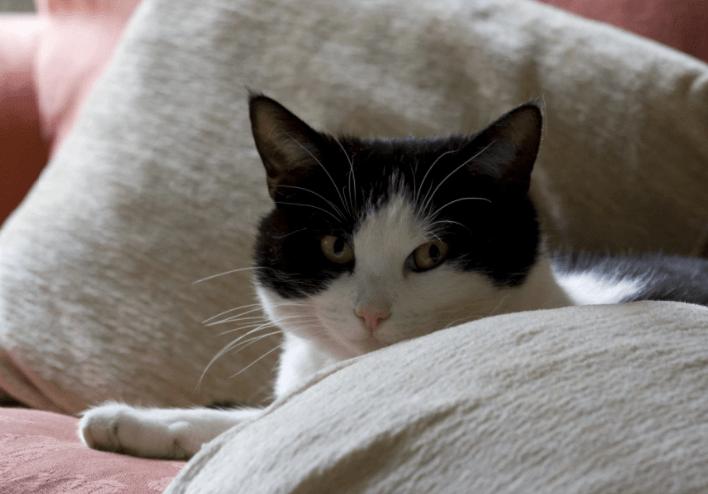 Can Cats Be Autistic? Cat illnesses, Feline leukemia