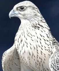 white falcon bird - Google Search | Other | Pinterest ...